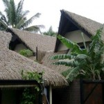 Thatch from Cook Island